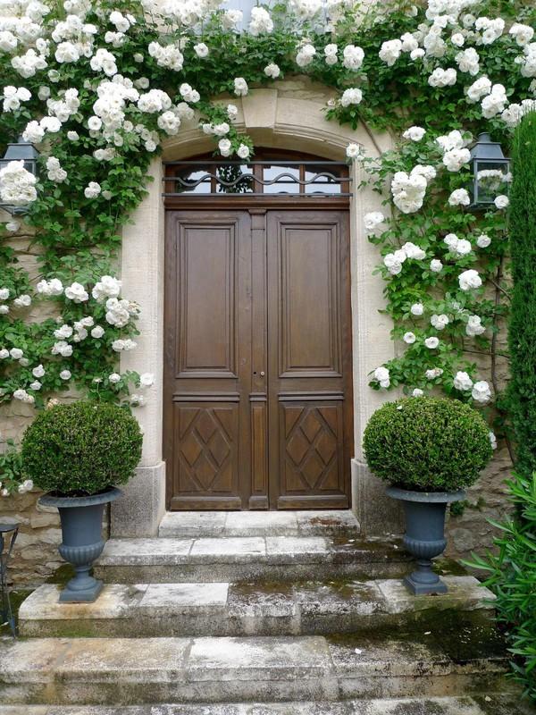 trồng hồng leo trước cổng nhà 9