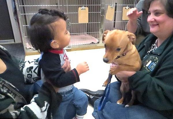 Cậu bé 2 tuổi và chú chó cùng mắc bệnh não úng thủy 1