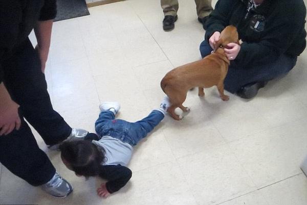 Cậu bé 2 tuổi và chú chó cùng mắc bệnh não úng thủy 3