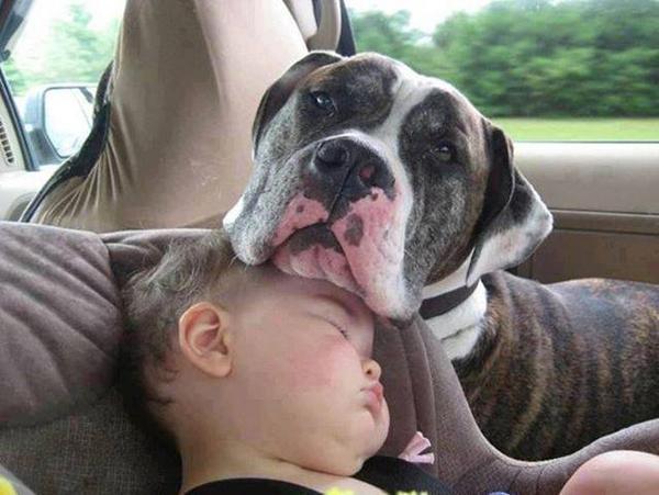 Không thể nhịn cười với chùm ảnh bé hài hước khi ngủ 6