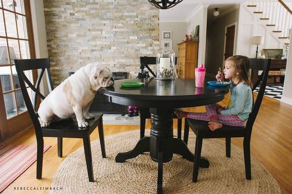 Tình bạn cực đáng yêu giữa cô bé 4 tuổi và chó cưng 7