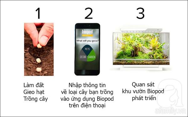 trồng rau