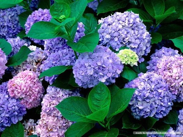 Muốn an toàn cho con, tuyệt đối không trồng 12 loại hoa, cây cảnh này trong nhà