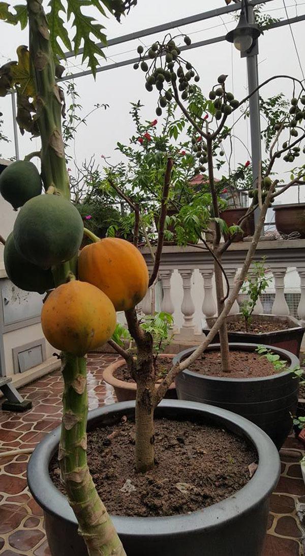 vườn 4