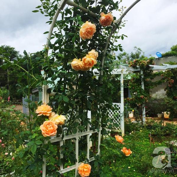 khu vườn 3