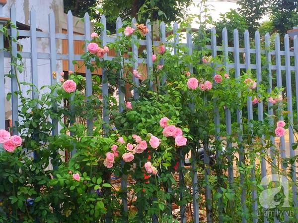 khu vườn 4