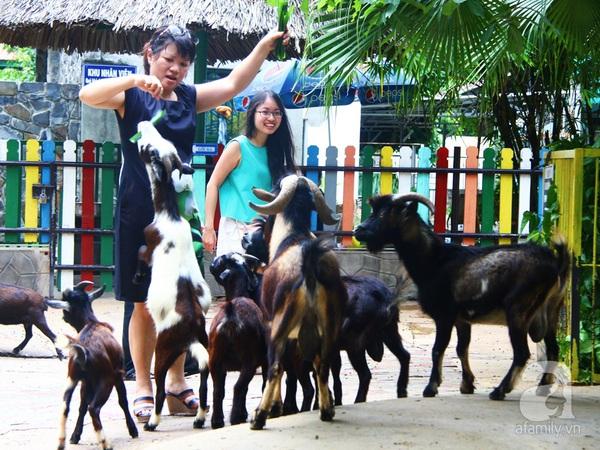 vườn thú thiếu nhi_11