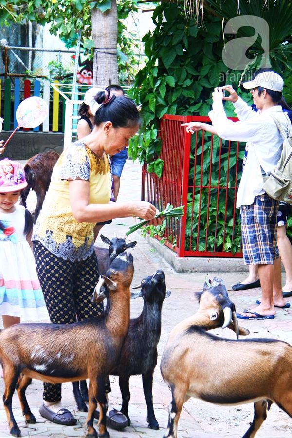 vườn thú thiếu nhi_8