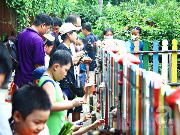 vườn thú thiếu nhi_9
