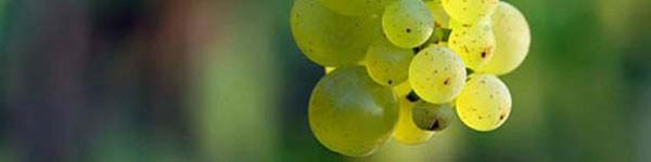 5 loại nước ép rau củ nên uống trong mùa đông 6