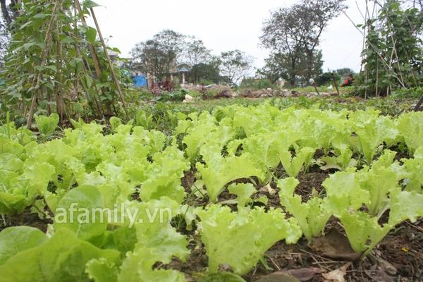 Hà Nội rộ mốt trồng rau sạch tại gia 1
