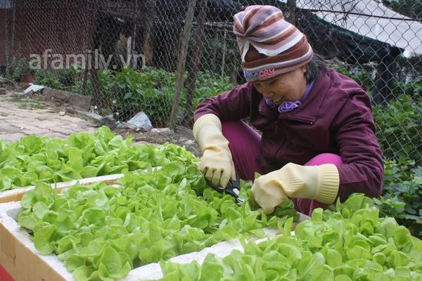 Hà Nội rộ mốt trồng rau sạch tại gia 7