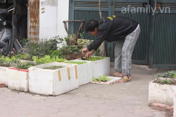 Hà Nội rộ mốt trồng rau sạch tại gia 11