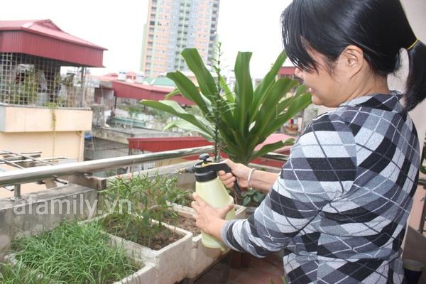 Hà Nội rộ mốt trồng rau sạch tại gia 15