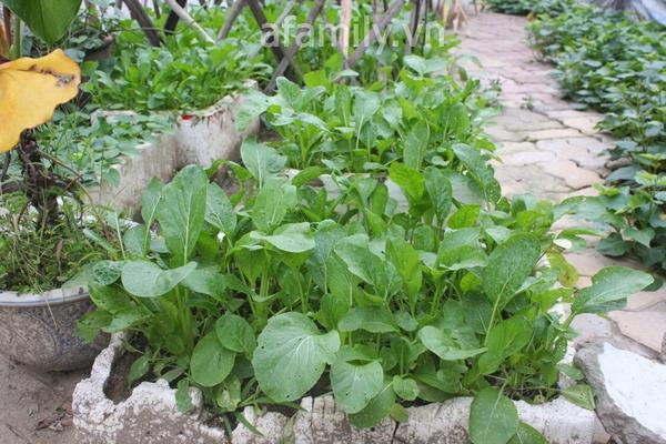 Hà Nội rộ mốt trồng rau sạch tại gia 14