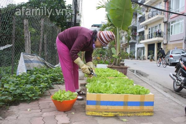 Hà Nội rộ mốt trồng rau sạch tại gia 13