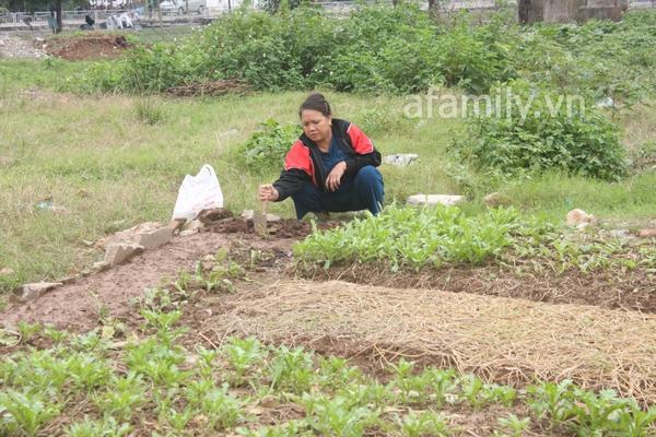 Hà Nội rộ mốt trồng rau sạch tại gia 3