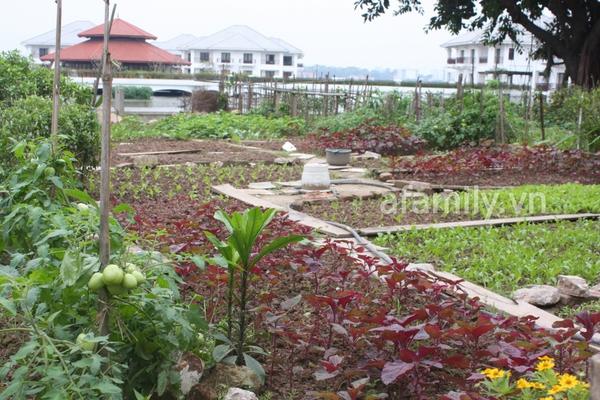 Hà Nội rộ mốt trồng rau sạch tại gia 5