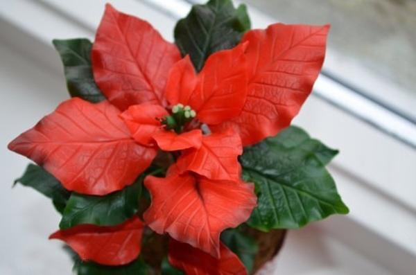 Noel này, trang trí nhà với hoa trạng nguyên thật đẹp! 17