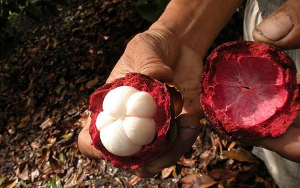 Điểm danh 4 vựa trái cây lớn nhất Nam Bộ 2