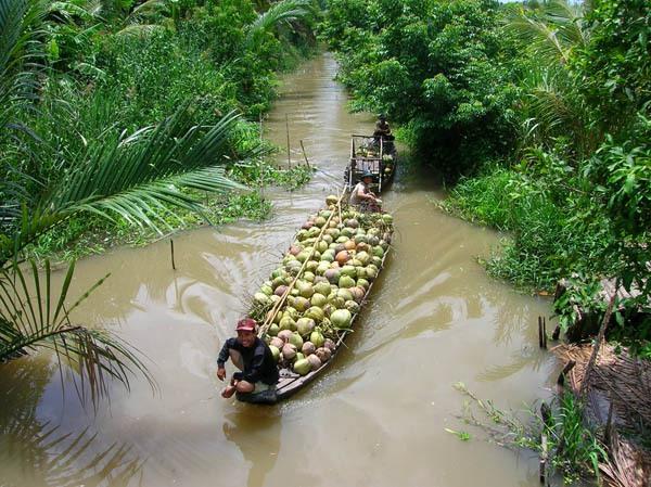 Điểm danh 4 vựa trái cây lớn nhất Nam Bộ 6