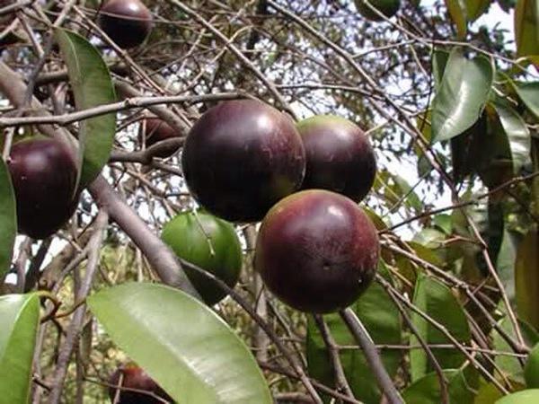 Điểm danh 4 vựa trái cây lớn nhất Nam Bộ 4
