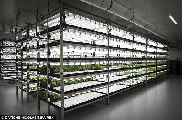 Độc đáo vườn rau sạch không ánh sáng mặt trời, không đất ở Nhật Bản 7