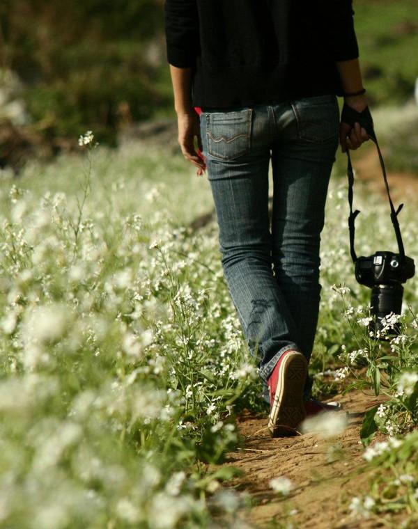 Chạy xe ngắm cảnh Mộc Châu mùa hoa cải 1