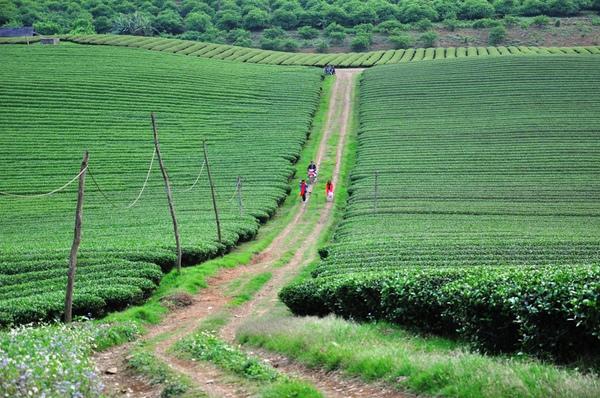 Chạy xe ngắm cảnh Mộc Châu mùa hoa cải 8