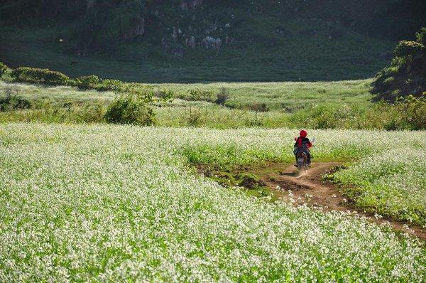 Chạy xe ngắm cảnh Mộc Châu mùa hoa cải 5