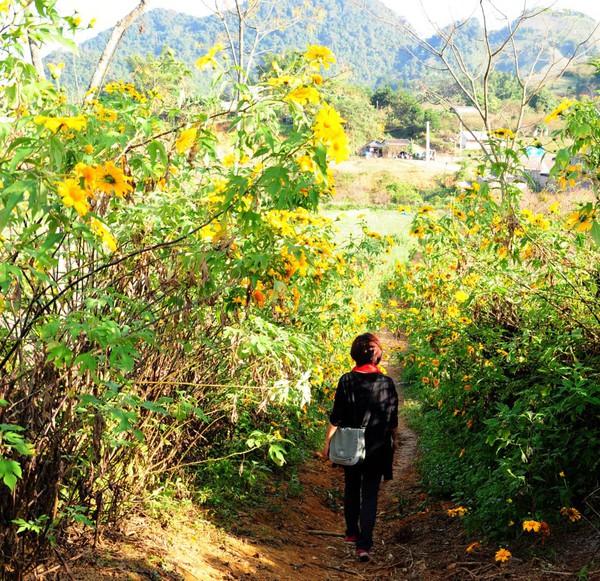 Chạy xe ngắm cảnh Mộc Châu mùa hoa cải 4