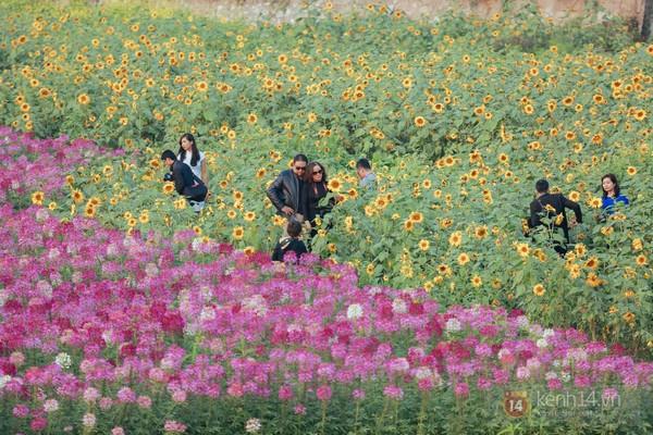 4 địa điểm chụp ảnh với hoa đẹp hút hồn ở Hà Nội 8
