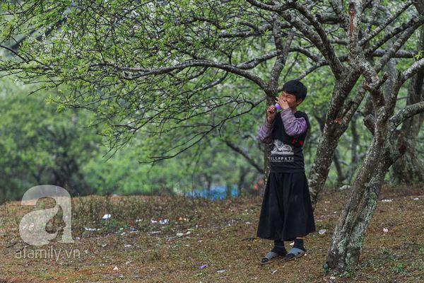 Phụ nữ, trẻ em trong khuôn hình thú vị mùa xuân Mộc Châu 13