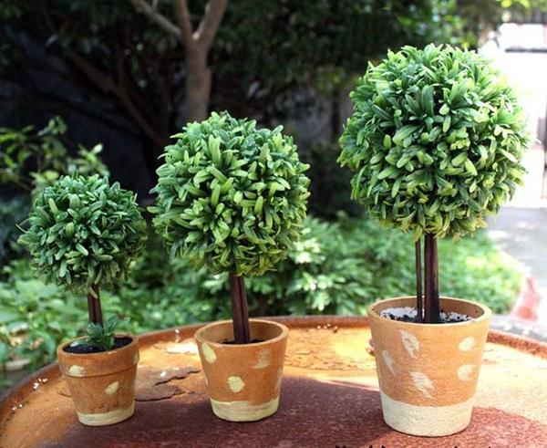 Góc làm việc thư thái hơn nhờ những chậu cây đẹp, dễ tìm mua 3