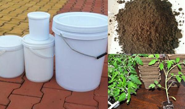 3 loại cây trồng trong nhà phố được bà nội trợ thích nhất năm 2014 6