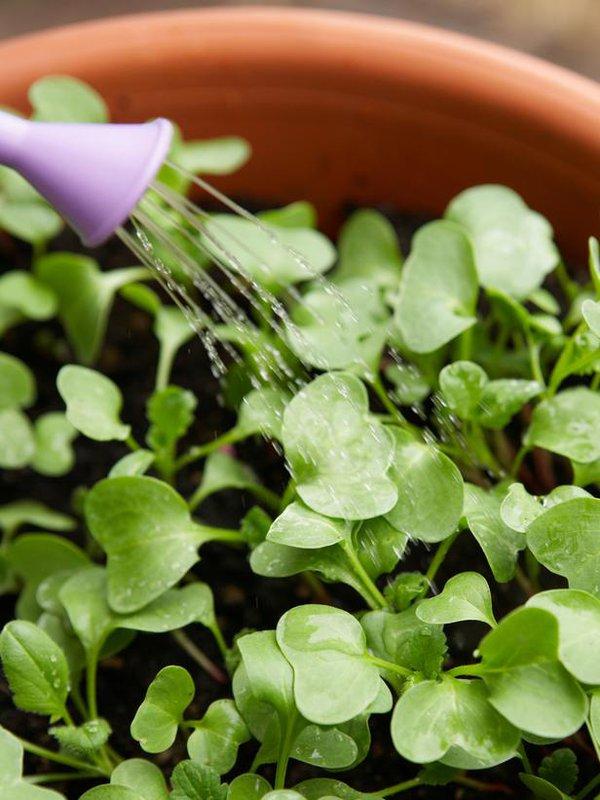 3 loại cây trồng trong nhà phố được bà nội trợ thích nhất năm 2014 10