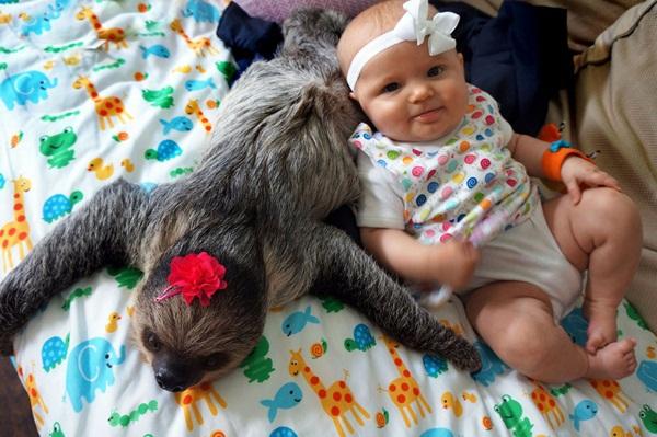 Bộ ảnh đáng yêu về tình bạn của cô bé 5 tháng tuổi và chú thú lười  1