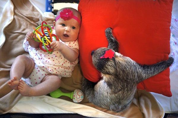 Bộ ảnh đáng yêu về tình bạn của cô bé 5 tháng tuổi và chú thú lười  11