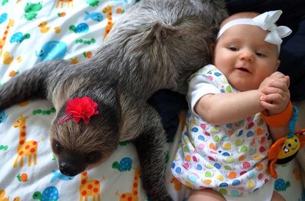 Bộ ảnh đáng yêu về tình bạn của cô bé 5 tháng tuổi và chú thú lười  12