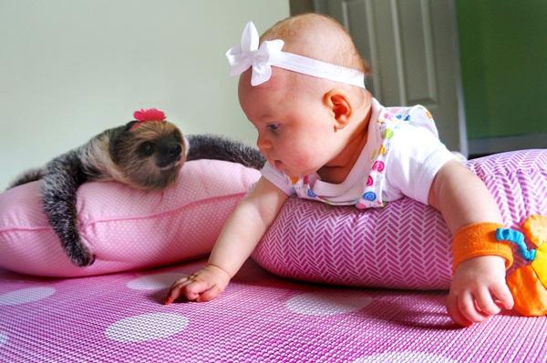 Bộ ảnh đáng yêu về tình bạn của cô bé 5 tháng tuổi và chú thú lười  2