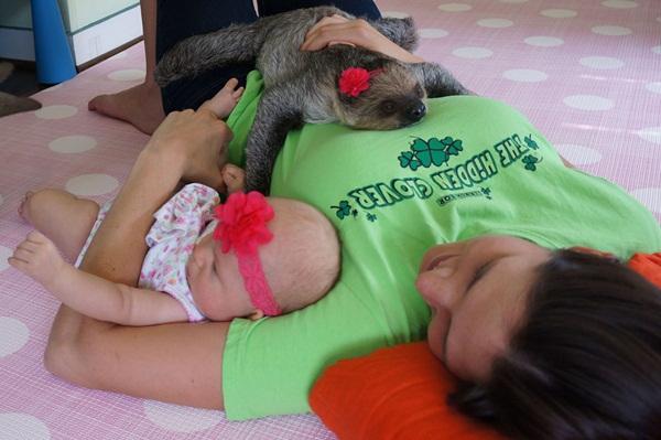 Bộ ảnh đáng yêu về tình bạn của cô bé 5 tháng tuổi và chú thú lười  3