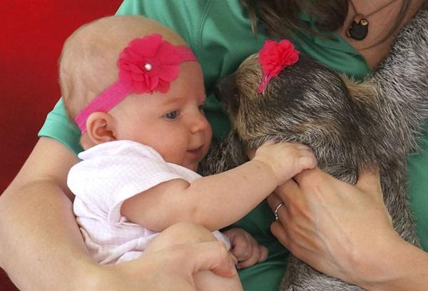 Bộ ảnh đáng yêu về tình bạn của cô bé 5 tháng tuổi và chú thú lười  7