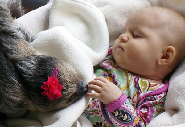 Bộ ảnh đáng yêu về tình bạn của cô bé 5 tháng tuổi và chú thú lười  9