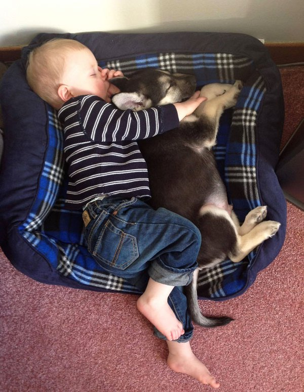 Chùm ảnh bé bắt chước động tác của thú cưng siêu đáng yêu 6