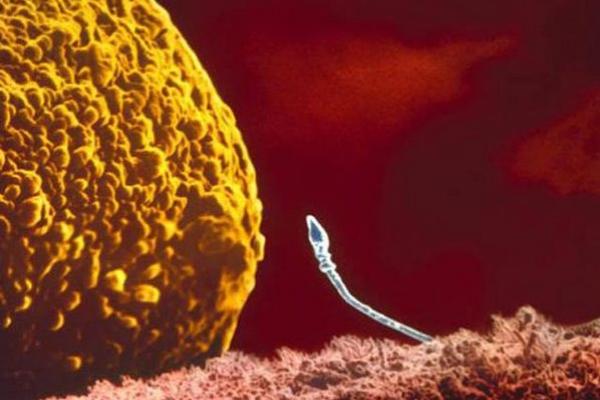 Sự lớn lên kì diệu của bào thai trong bụng mẹ 3