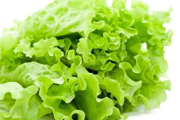 Công dụng của 7 chất dinh dưỡng trong rau diếp làm bạn ngạc nhiên 1