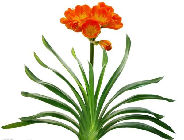 5 loại cây phong thủy nên có trong nhà vào dịp Tết 2013 7