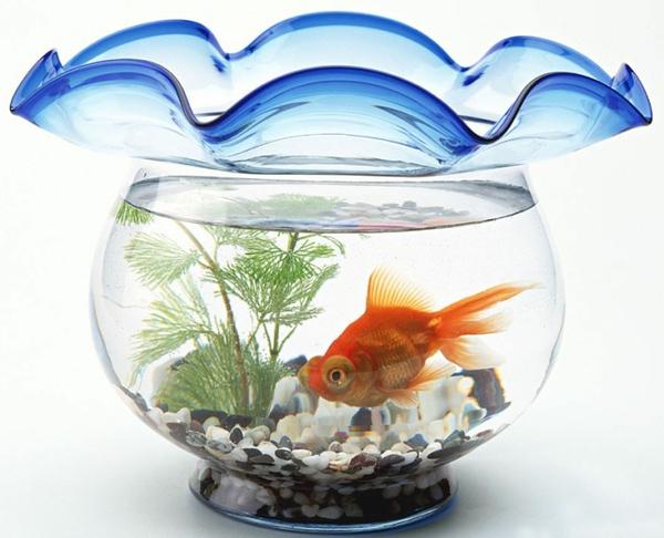 4 cách bài trí bể cá hợp phong thủy 2