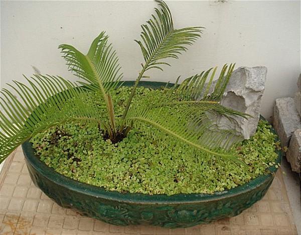 Nguyên tắc chọn cây trồng hợp phong thủy 4
