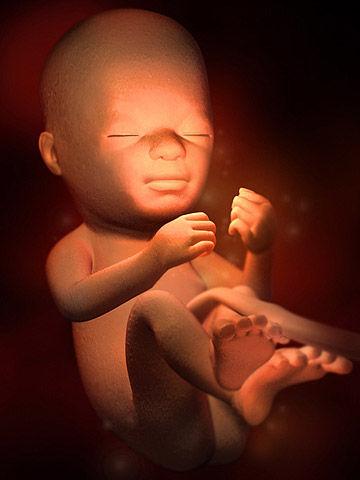 Quá trình thai nhi lớn lên trong bụng mẹ